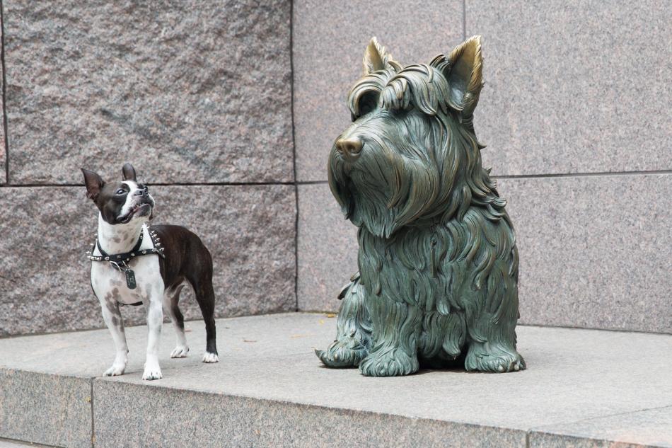 Fala, Franklin D. Roosevelt's dog with Meelo (aka Meatloaf). © J. Ashley Nixon