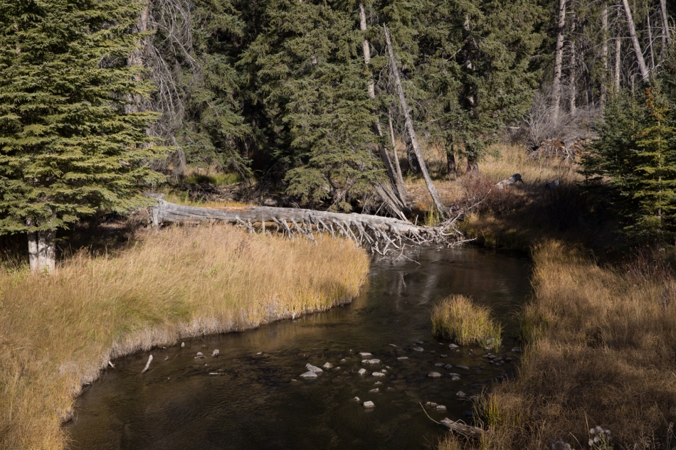 Vermilion Lakes wetland at the back of The Fenlands Banff Recreation Centre © J. Ashley Nixon