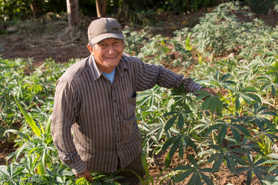 Manuel in his chacra (small-holding) showing camote (sweet potato) plants below Hotel Urqu, Jaén, Cajamarca, Peru. © J. Ashley Nixon