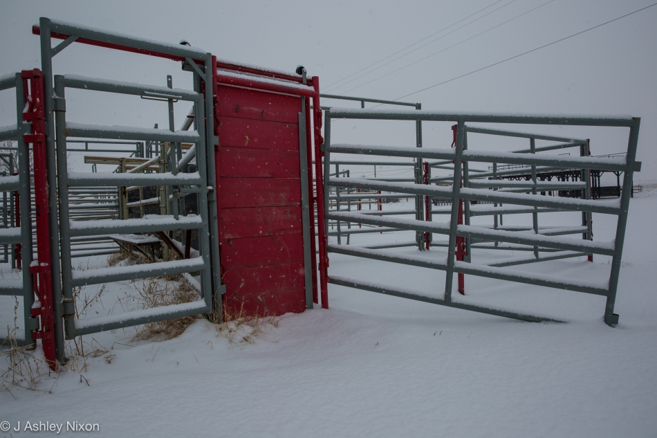 Snowy paddocks waiting for spring in Stavely, home of Canada's First Indoor Rodeo. © J. Ashley Nixon